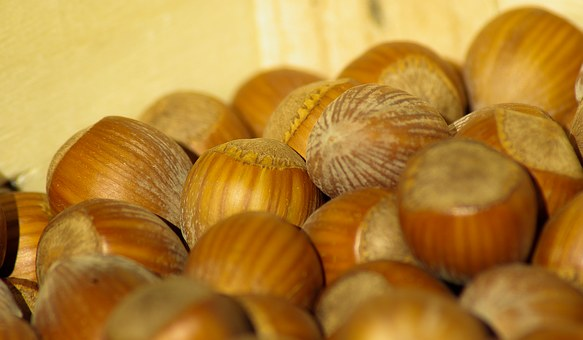 Hazelnuts, Dried Fruit, Fall, Hazel