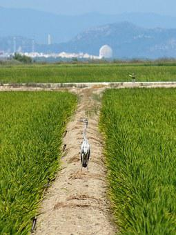 Ebro Delta, Paddy, Kingfisher, Nuclear