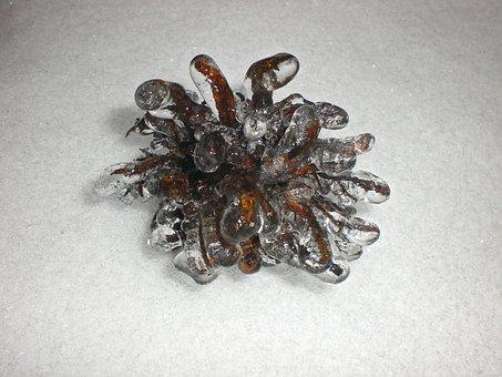 Hazel Tree, Ice, Eiskristalle, Winter, Hoarfrost