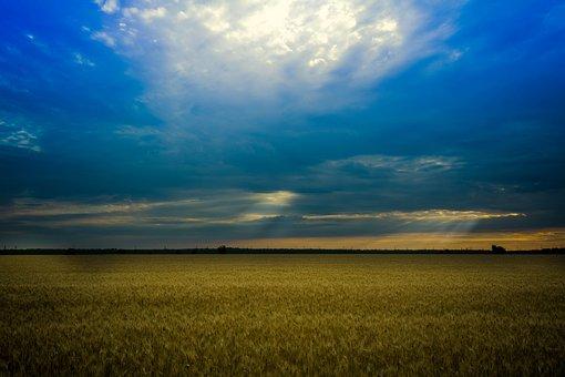 Wheat, Lan, Sun, Field, Fon, Stefan Voda, Cloud, Sunset