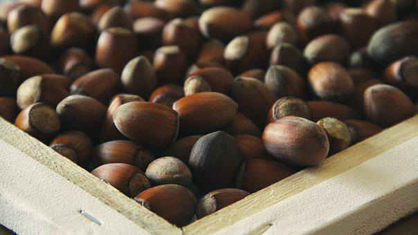 Hazel, Nuts, Food, Healthy, Nutrition, Natural, Organic
