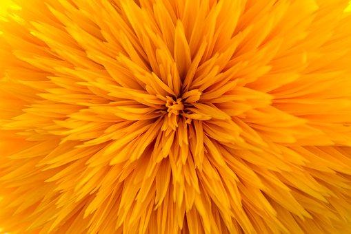 Sunflower, Filled, Gene Defect, Model Arles
