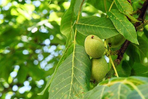 Branch, Crop, Crust, Food, Fresh, Green, Grow, Growing