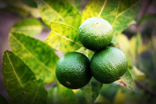 Lime, Lemon, Slice, Green, Whole, White, Leaf, Citrus