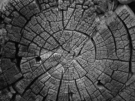 Trunk, Section, Old Wood, Rings, Cross-section