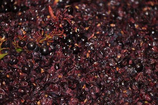 Grapes, Pinot Noir, Harvest, Wine, Ripe, Vineyard