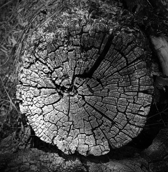 Trunk, Section, Old, Worn, Cross-section, Texture