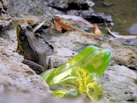 Radioactive Frog, Climate Change, Toxic Waste