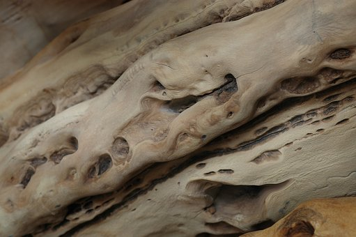 Wood, Defects, Tribes