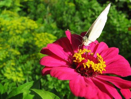 Butterfly, Butterfly On A Flower, Pink Flower