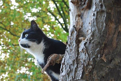 Cat, Hunting, Hunt, Mieze, Domestic Cat, Animal, Catch