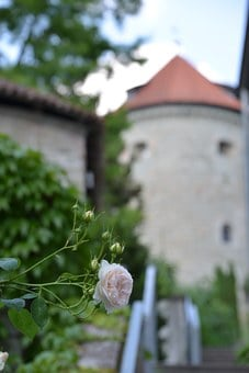Rose, Fairy Tales, Sleeping Beauty, Castle, Rose Hedge