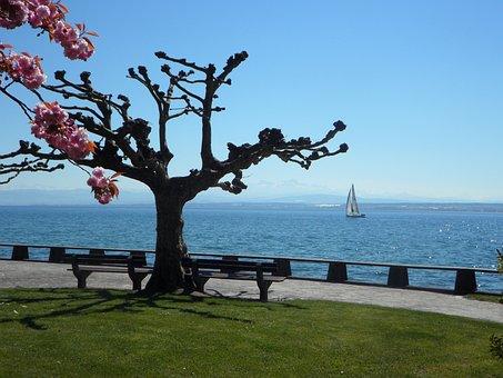 Lake Constance, In The Spring, Spring, Landscape, Lake