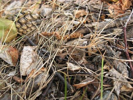 Land, Pine Cone, Straw, Dry Grass, Grass, Summer