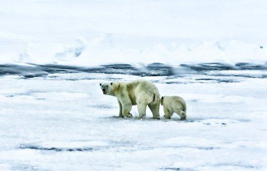 Arctic, Sea, Ocean, Polar Bears, Wildlife, Animals