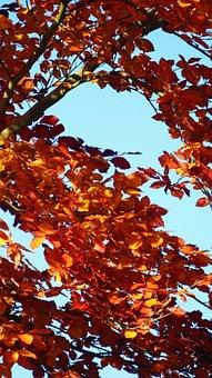 Golden Autumn, Autumn, Orange, Sky, Blue, Aesthetic