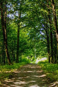 Forest, Way, Foliage, The Path, The Road In The Forest