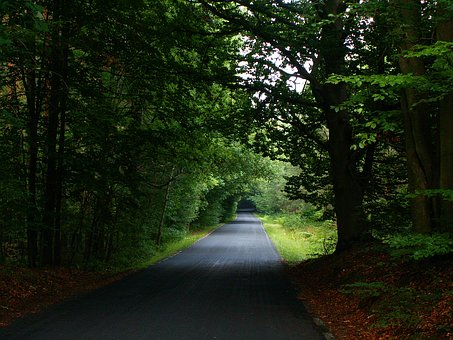 Way, Forest, The Road In The Forest, Alley, Asphalt
