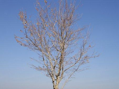 Tree, Dead, Winter, Fall, Autumn, Nature, Environment