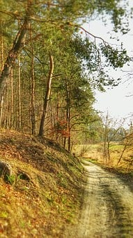 Forest, Way, The Road In The Forest, Tree, Landscape