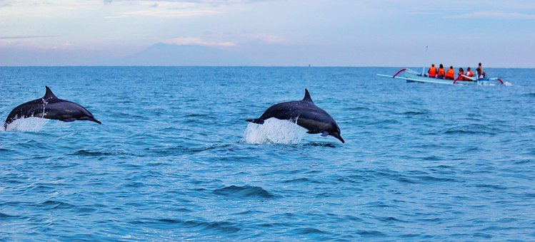 Dolphins, Ocean, Water, Jumping, Wildlife, Marine, Jump
