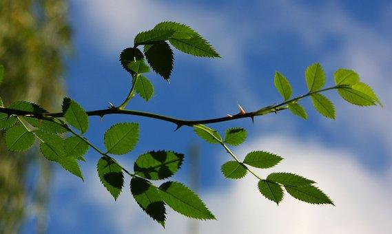 Sky, Branch, Green, Spring, Shades Of Green