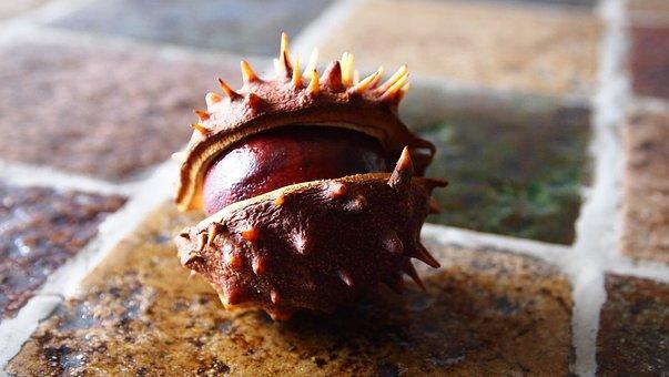 Chestnut, Bolster, Autumn, Table, Nature, Chestnuts