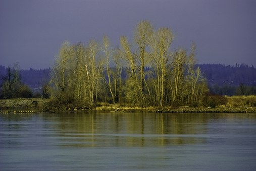 River, Shore, Fall, Color, Sauvie Island, Oregon