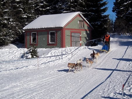 Germany, Winter, Snow, Ice, Dogs, Race, Racing, Man