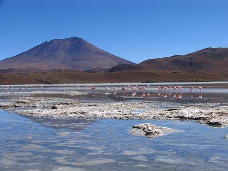 Bolivia, Landscape, Lake, Flamenco, Wild Nature