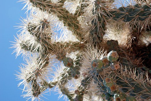 Cactus, Sharp, Desert, Green, Plant, Nature, Botany