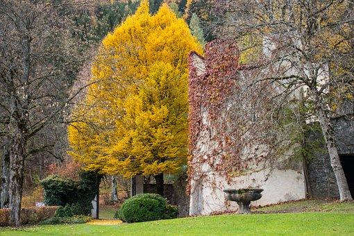 Tree, Park, Autumn, Parks, Parklandschaft