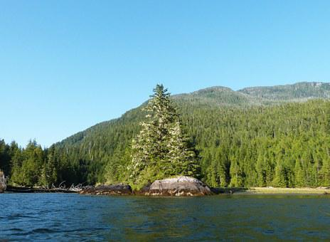 River, Fjord, Nature, Tree, Pine, Water, Columbia
