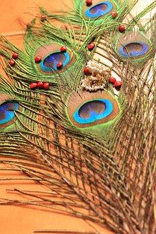Peacock Feather, Peacock, Abrus Precatorius