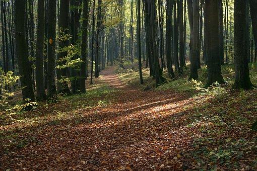 Autumn, Foliage, Brown, Tree, Yellow Leaves