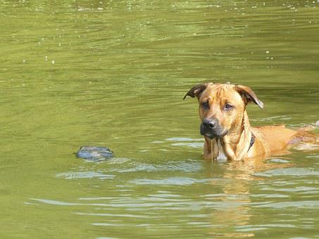 Dog, Water, Fun, Play, Sunny Day, Cooling, Wet, Romp