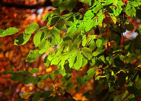 Leaves, Sunlight, Leaf, Back Light, Plant, Forest