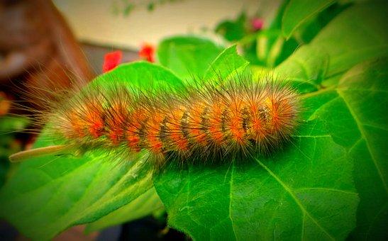Caterpillar, Worm, Eruca, Hairy, Wildlife, Bug, Bright