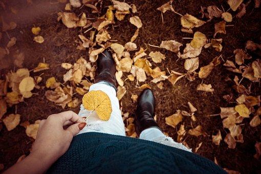 Autumn, Fall, Leaves, Nature, Yellow, Leaf, Orange