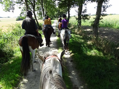 Horses, Ride, Migratory Ride, Equestrian Group, Summer