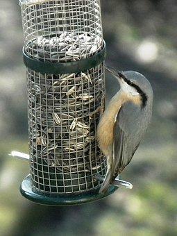 Kleiber, Bird, Food, Peck, Feather Sunflower Seeds