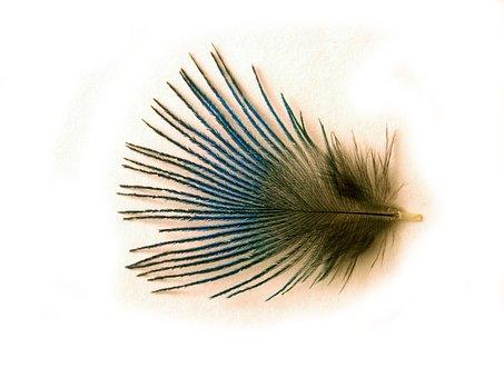 Plumule, Lightness, Peacock, Shine, Subtlety, Fine Pen
