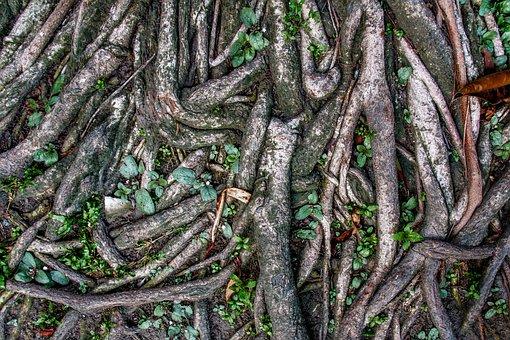Root Wood, Sai Root, Ton Sai
