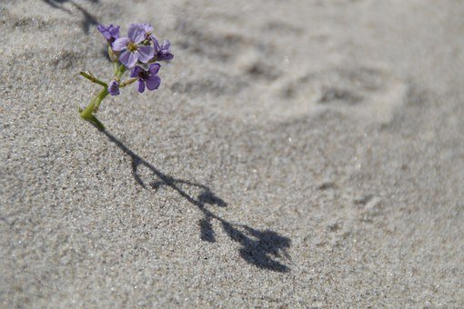 Sand, Beach, Vegetation, Flora, Flower, Small, Lonely