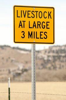 Road Sign, Sign, Livestock At Large, Livestock, Cattle