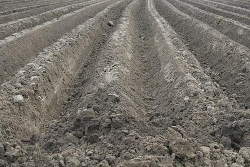 Field, Orka, Soil, The Cultivation Of, Agriculture