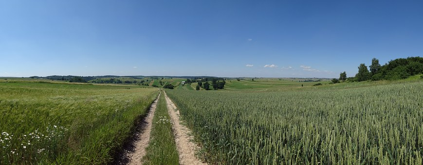 Racławice, Poland, Landscape, The Cultivation Of