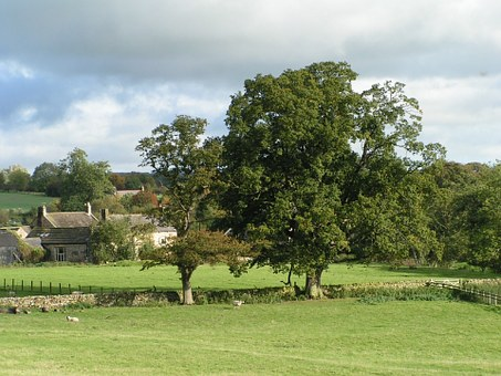Countryside, England, Oak Tree, Landscape, Farm, Trees