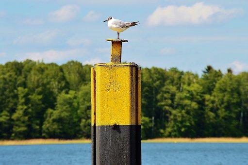 Seagull, Bollards, Landing Bridge, Werbellinsee, Water