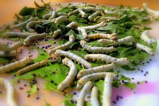 Silkworm, Insects, Caterpillar, Insect, Wildlife, Bug